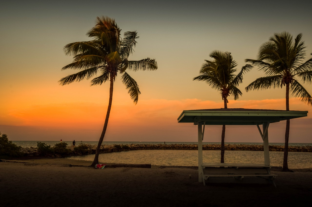 Palm Trees at Sunset in Key Largo, Florida